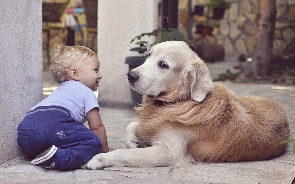 A relação do bebê com os animais